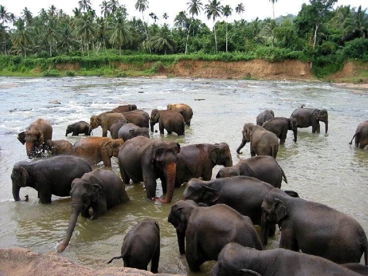 слоновий поселок