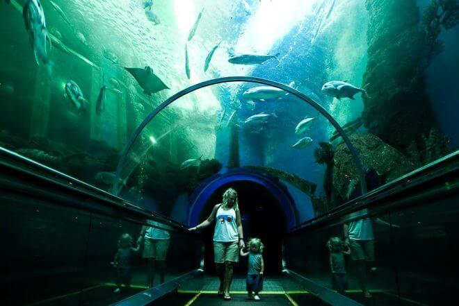 районг аквариум